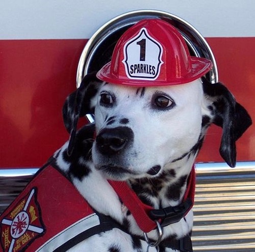Teaching Animal firefighters to the rescue
