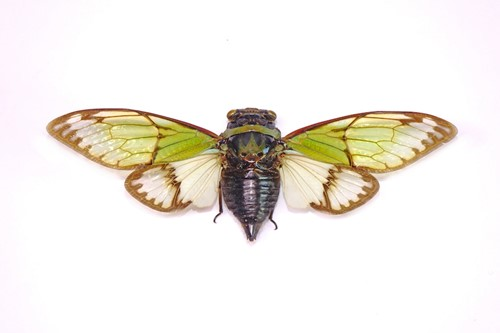 Teaching Billions of Cicadas Are Coming! Here's Why That's Actually Awesome