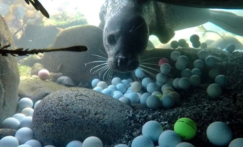 Teaching A teen scientist helped me discover tons of golf balls polluting the ocean