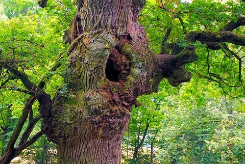 Teaching Family Tree