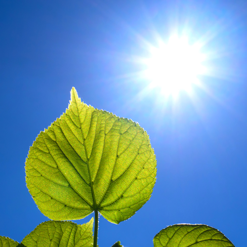 Teaching The Role of Photosynthesis: MS LS 1-6