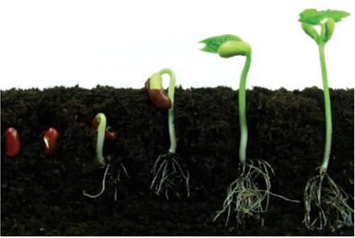 Teaching What plants need