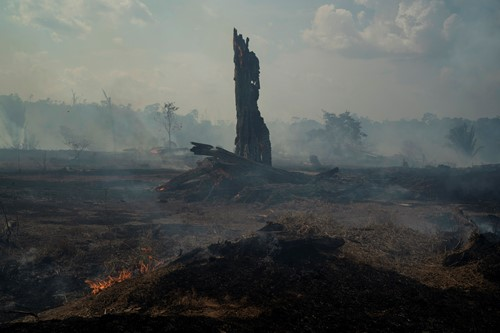 Teaching The Amazon is burning: 4 essential reads on Brazil's vanishing rainforest
