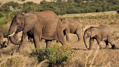 Teaching How Elephants Originated: A Tale from Kenya