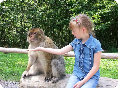Teaching Primates