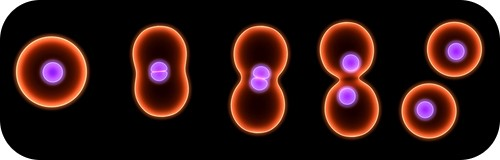 Teaching Cell division
