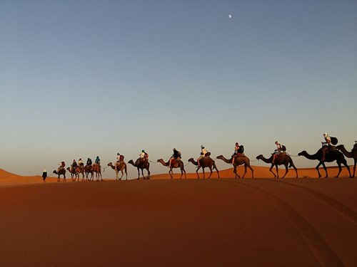 Teaching The Berbers and Their Camel Caravans