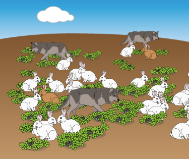 Teaching Natural Selection - Adaptations [PhET Simulation]