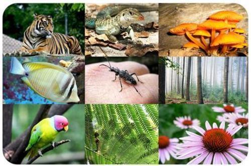 Teaching Biodiversity