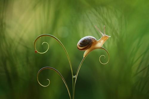 Teaching Can Snails Fart?
