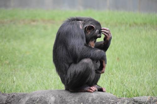 Teaching Animals decide