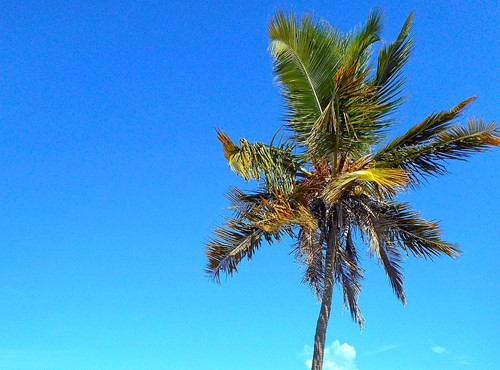 Teaching The First Coconut Tree: A Tale from the Pacific Island of Micronesia