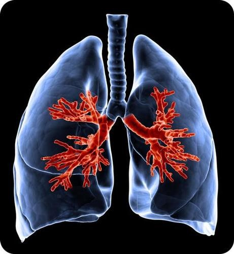 Teaching Respiratory system organs