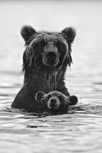 How Little Bear Learned To Swim