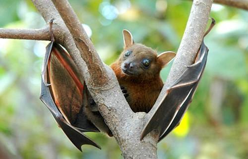 Teaching Going Batty