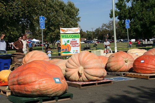 Teaching Physics of Giant Pumpkins [video]